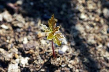 growth-621090_1280