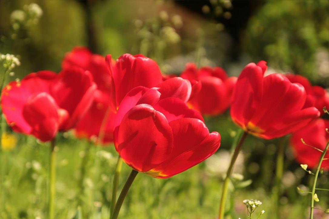 flower-722791_1280